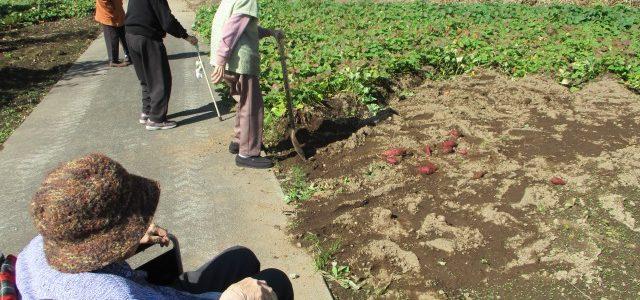 芋掘り!(^^)!